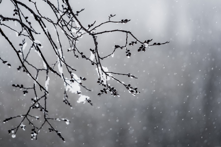 Первые выходные нового года в Твери будут ветреными