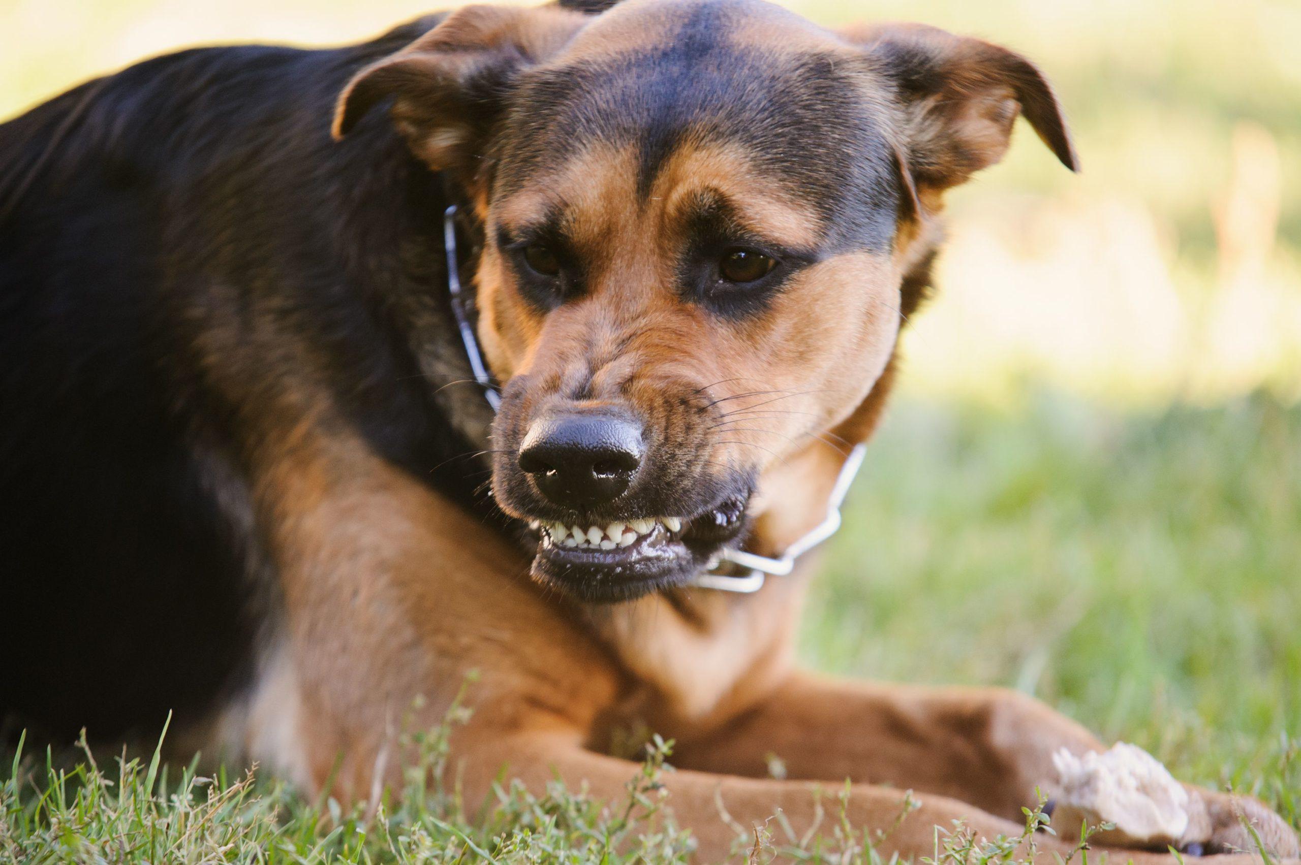 В Зубцовском районе выявлен случай бешенства у собаки