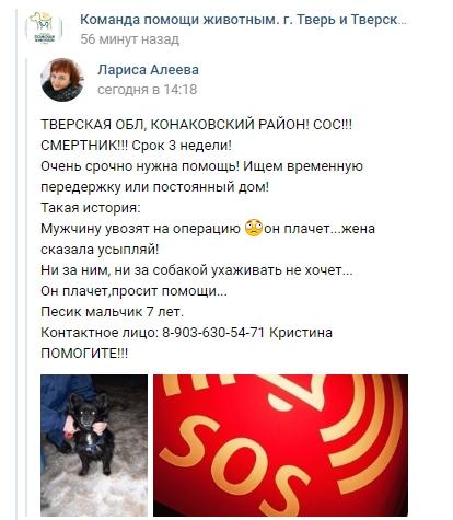 В Тверской области жена угрожает усыпить собаку больного мужа