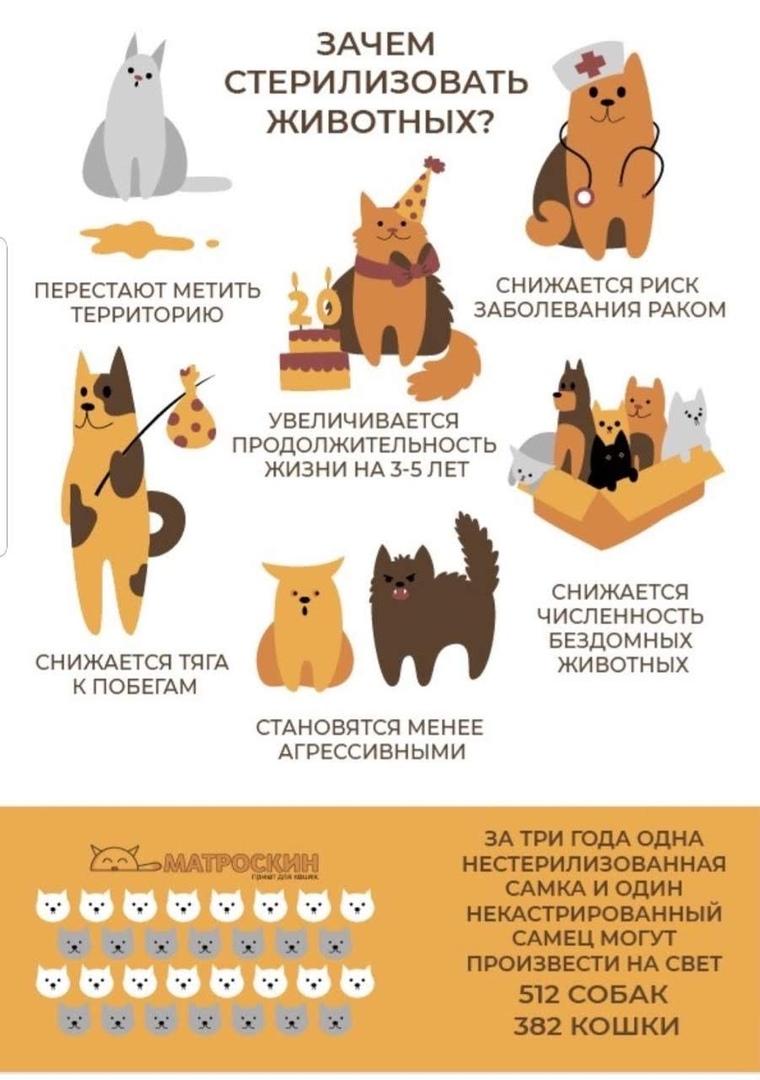 Сотрудники котокафе в Твери рассказали о стерилизации кошек