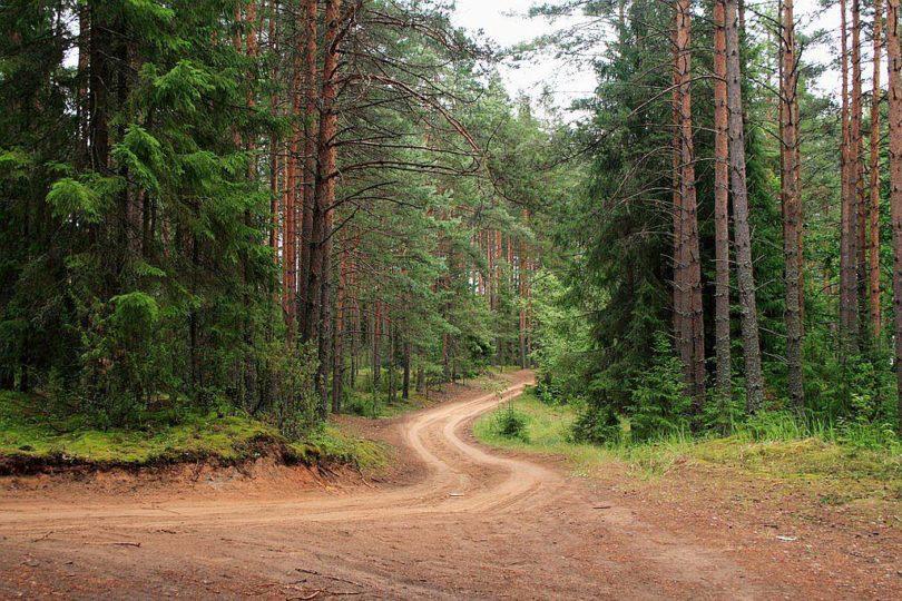 В Тверской области закупят 122 единицы техники для восстановления лесов и защиты от пожаров