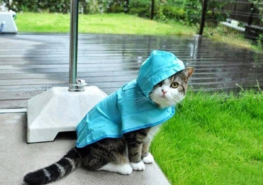 Тверь встретит праздник дождем