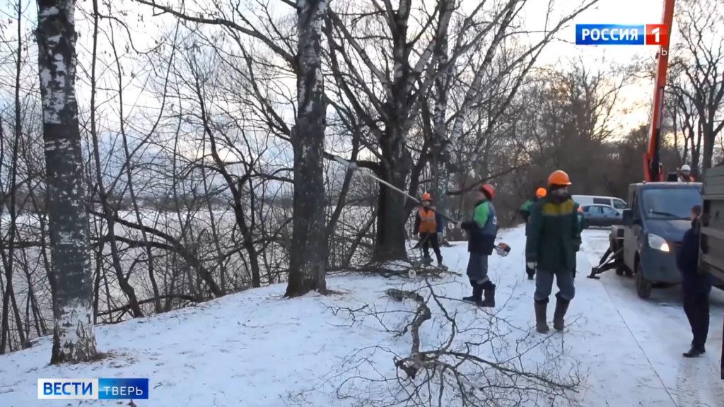 Тверская администрация объяснила масштабную обрезку деревьев