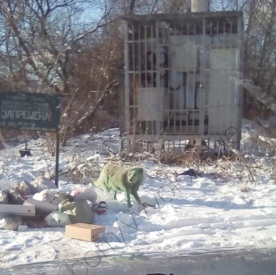 В Тверской области бегает зеленая собака