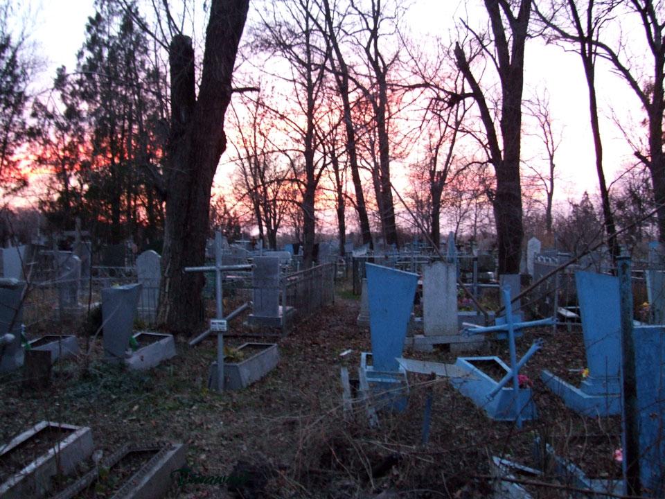 В Тверской области обнаружены пять незаконных кладбищ