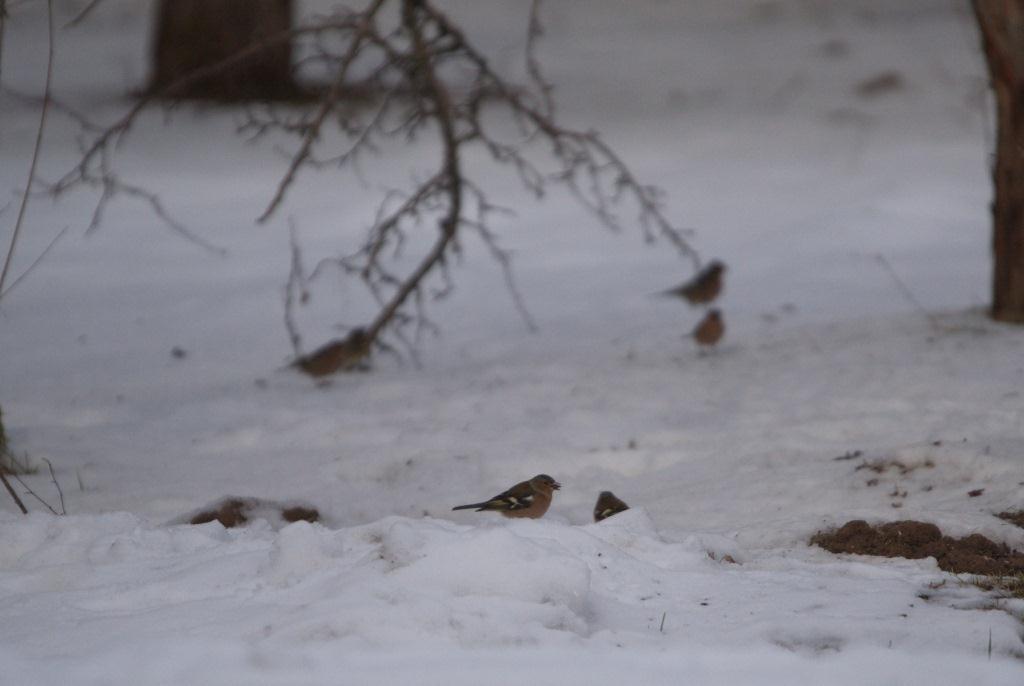 В заповеднике Тверской области зимуют птицы, которых здесь быть не должно