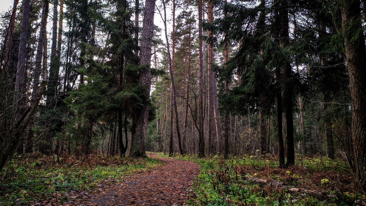 В Тверской области восстановят более 14 гектаров леса