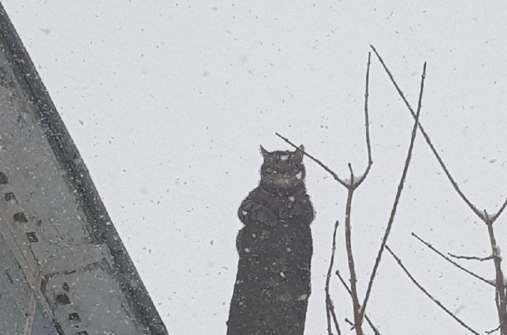 В Твери спасли котика, два дня сидевшего на дереве