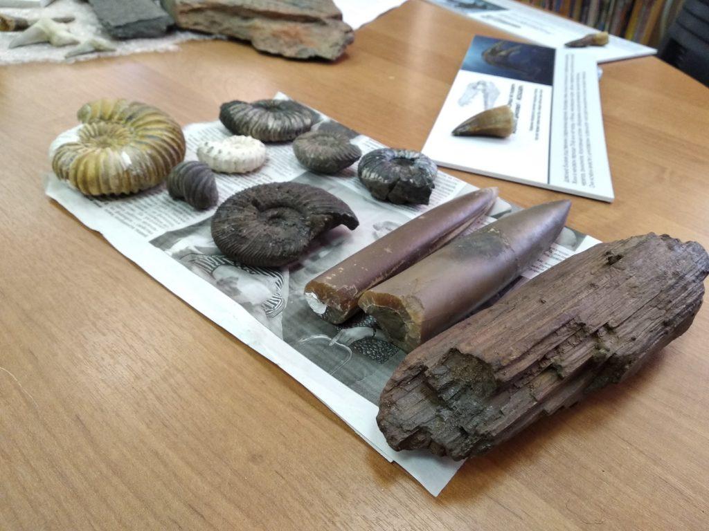 """Спецпроект """"Тверьлайф"""": Тактильную палеонтологическую выставку провели в Твери"""
