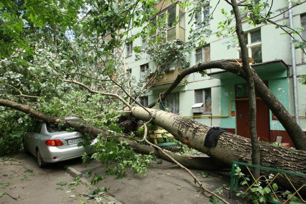 За тёплым январем Тверь ожидают летние ураганы
