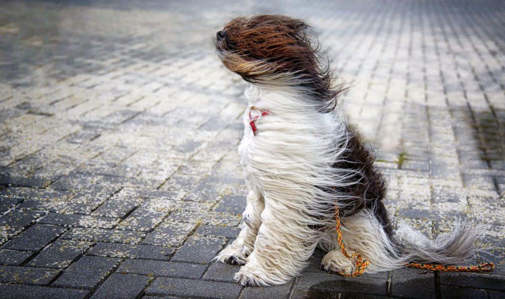 МЧС предупреждает об усилении ветра в Тверской области