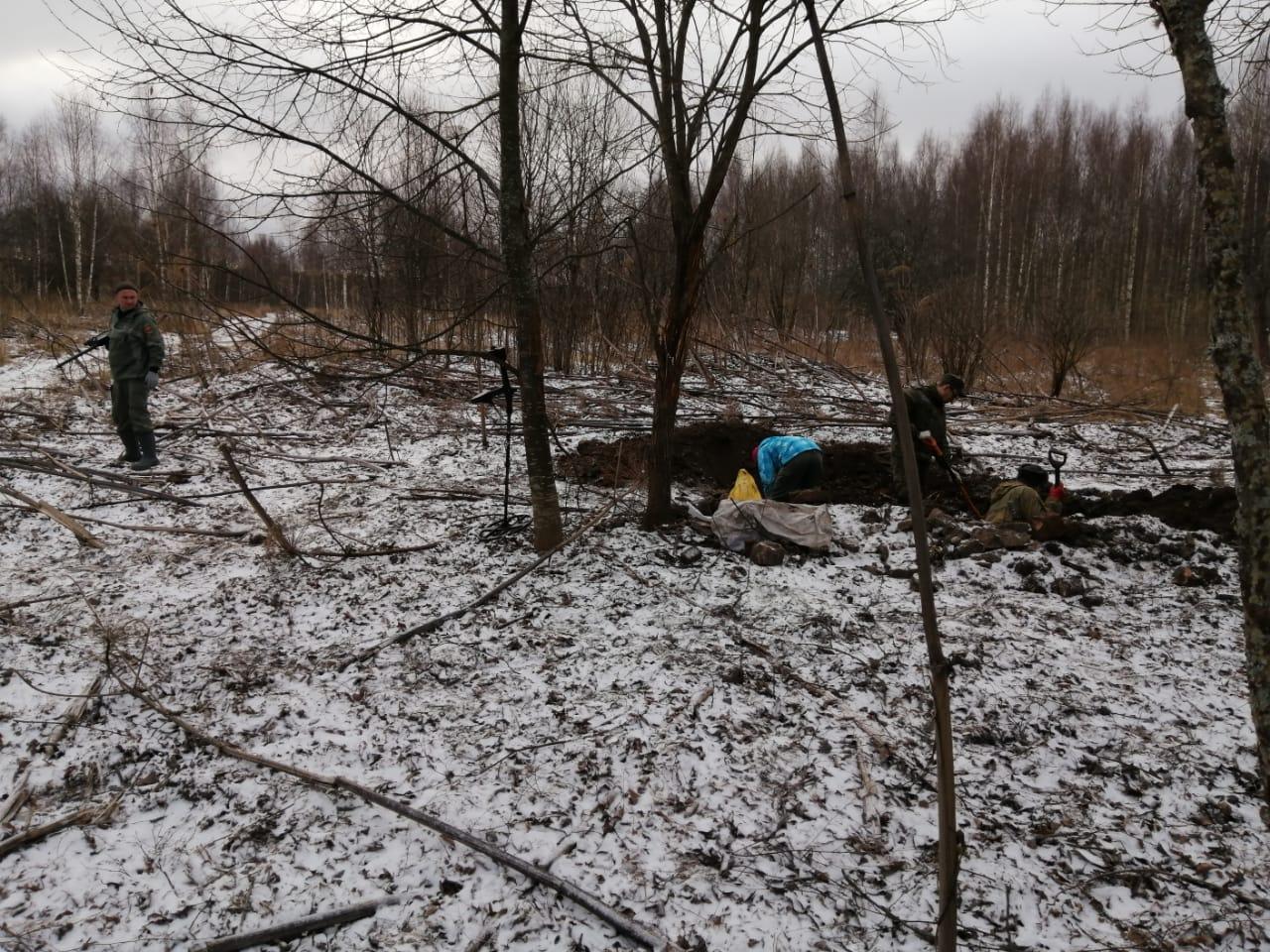 Кабаны помогли найти останки солдат в Тверской области