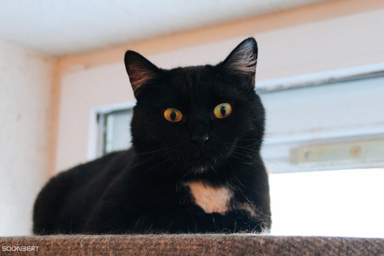 Работящий кот Уголек из Твери ищет дом, семью и тепло