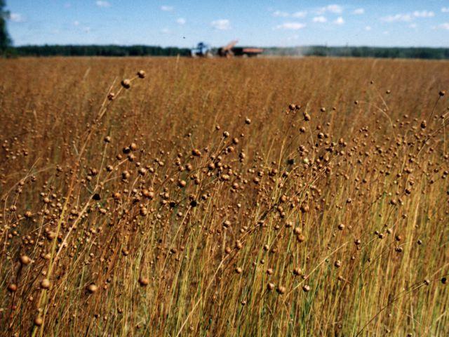 Варвара Генг: Вложение инвестиций в сельское хозяйство - это прорыв для региона