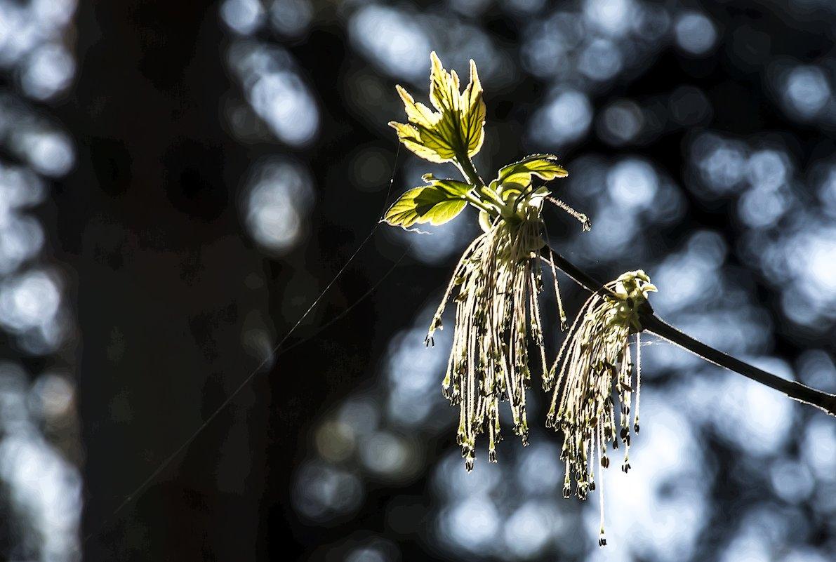 В Тверскую область пришла настоящая весна