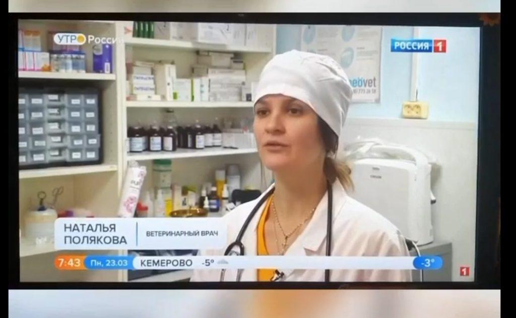 Тверской ветеринар рассказала о коронавирусе у животных