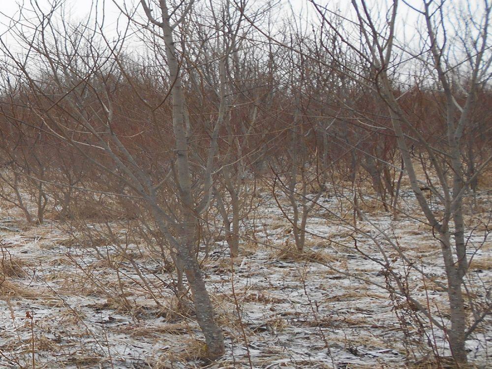В Тверской области нерадивый землевладелец оштрафован за неисполнение предписания