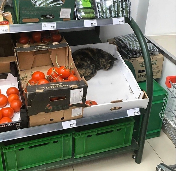 Кот охраняет продукты в Тверской области