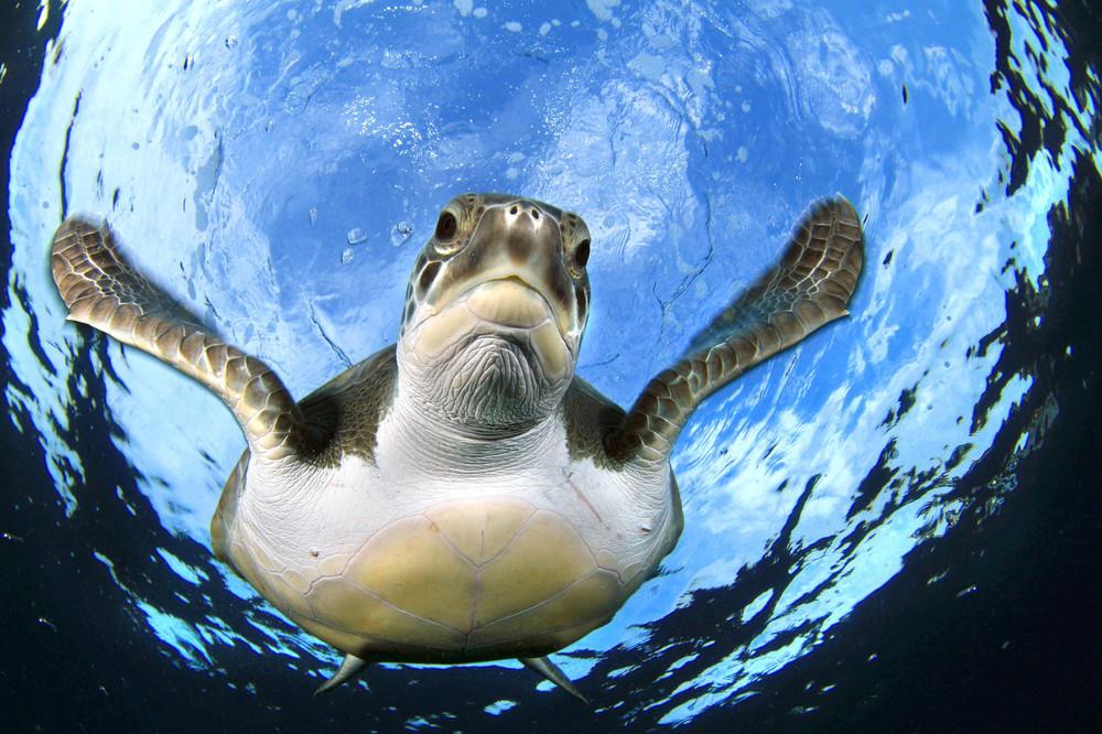 В Твери рыбак ловил рыбу на червя, а повстречал огромную черепаху