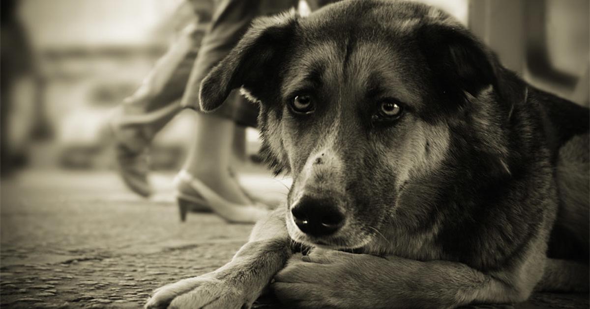 В Тверской области  мужчина жестоко избил собственную собаку и сбросил с балкона