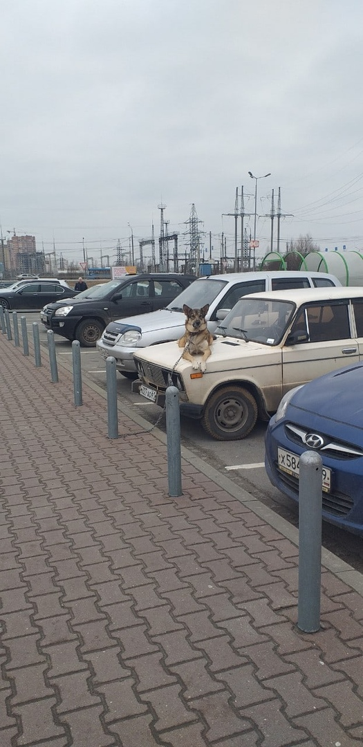 Собака работает сигнализацией в Тверской области