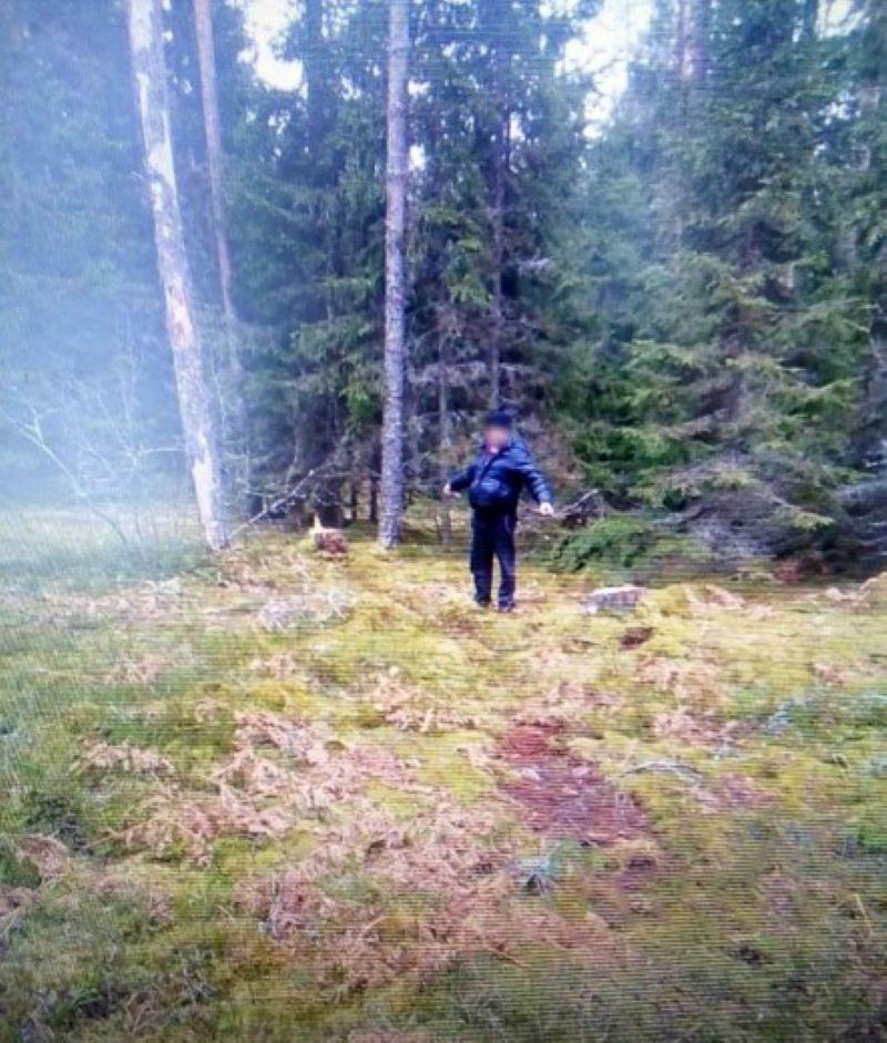 Мужчина из Тверской области незаконно спилил 59 сосен