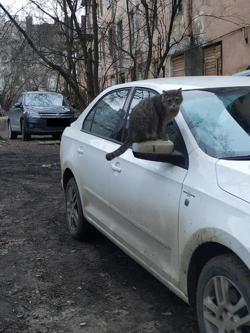 Охранная видеокамера нового поколения обнаружена на автомобиле в Твери