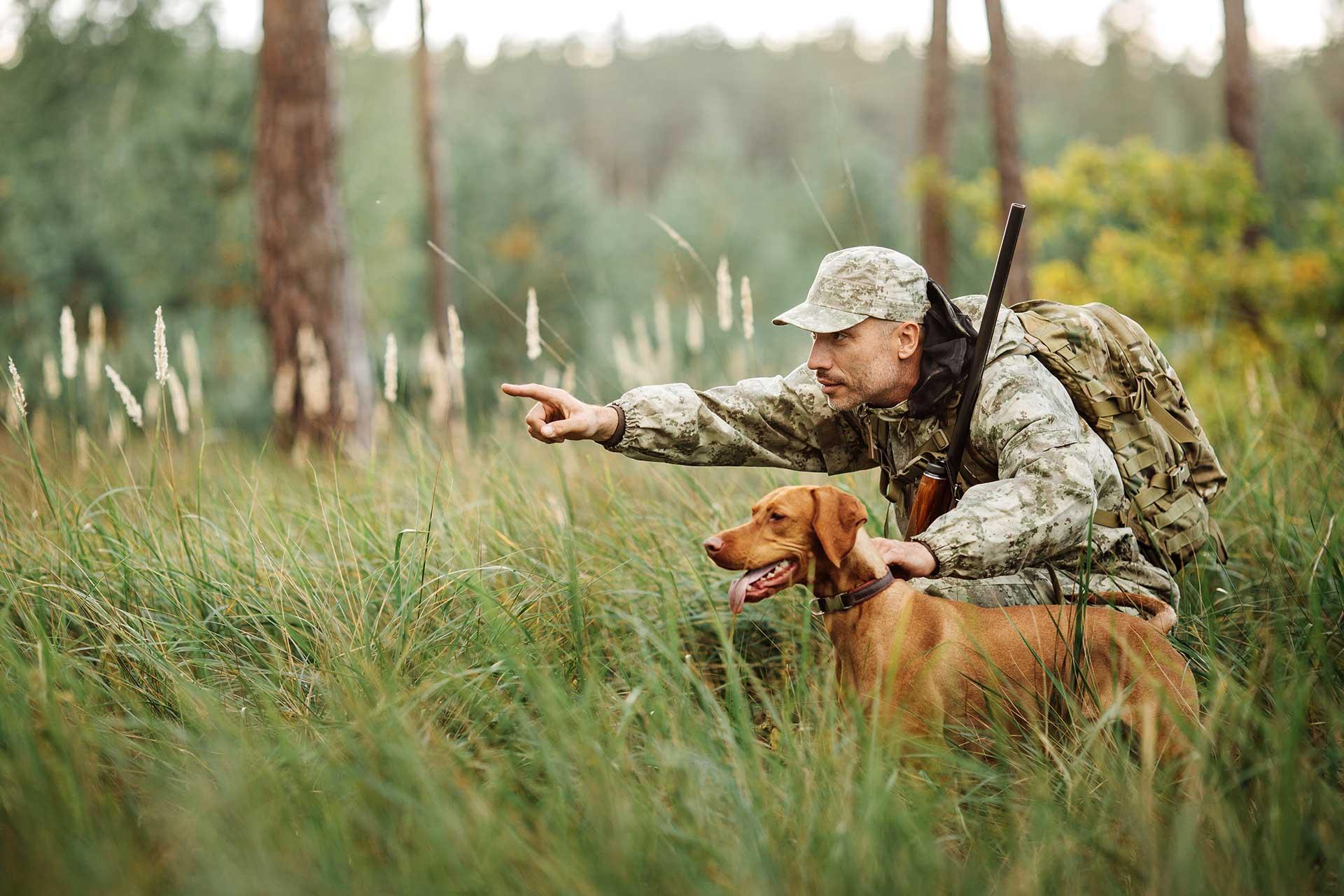 Введены ограничения на охоту в Тверской области