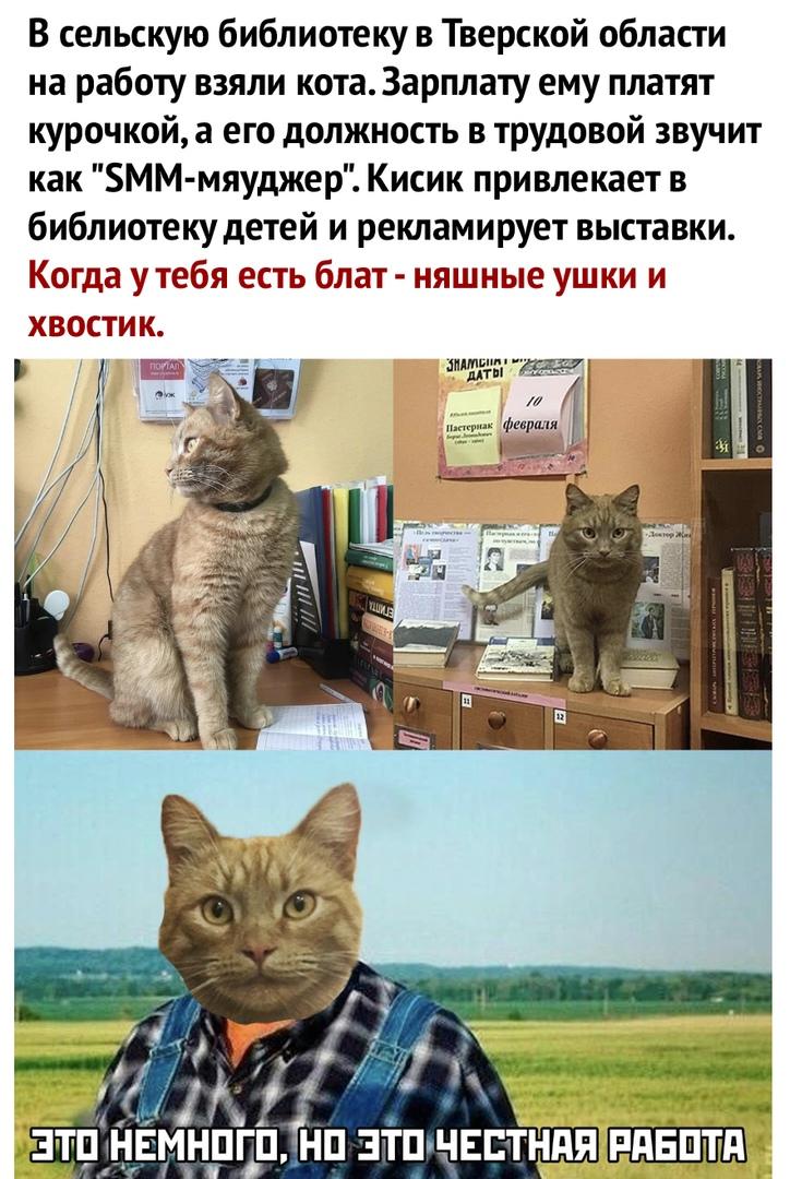 Кот из Тверской области стал интернет-суперзвездой