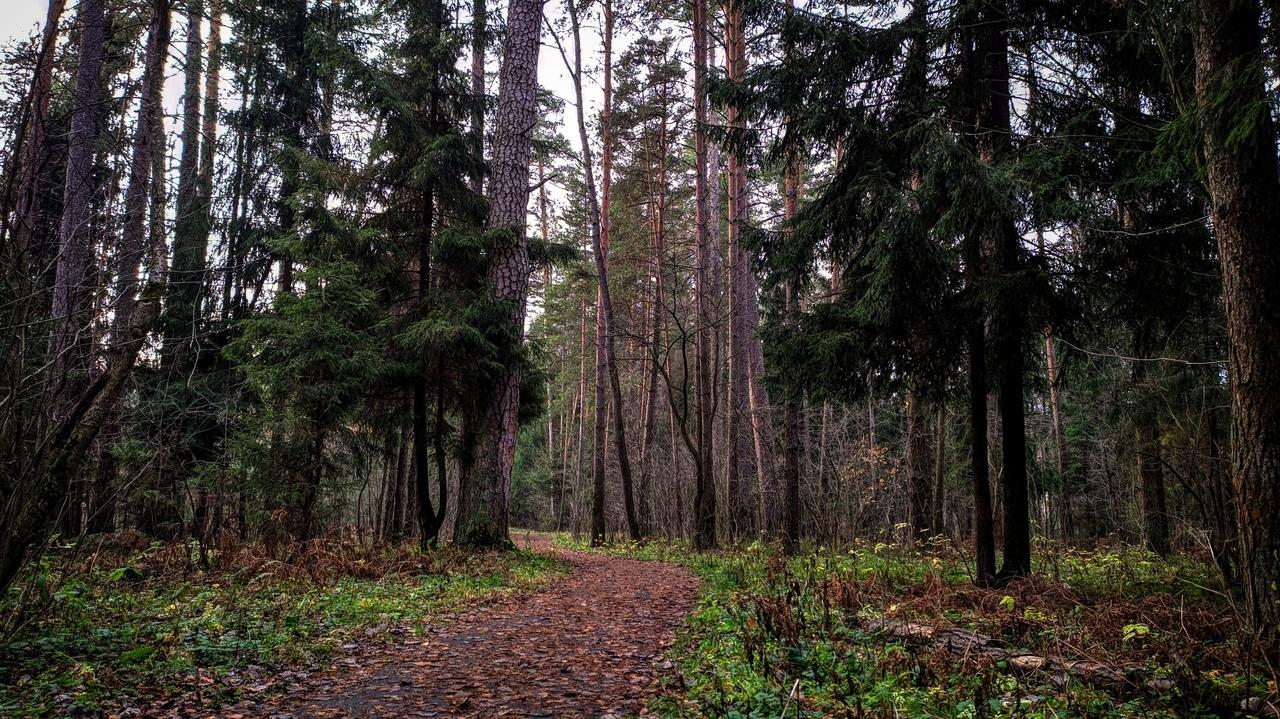 В Спировском районе Тверской области увеличилась площадь лесов