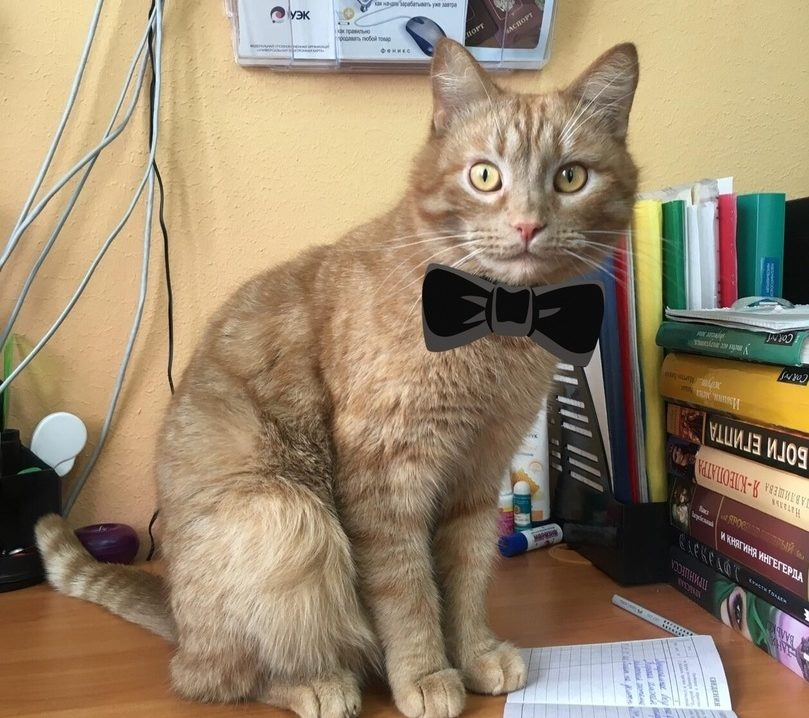 В Тверской области трудоустроили котика