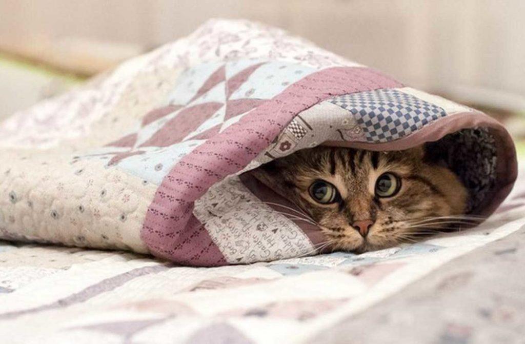 В Тверской области ожидается похолодание