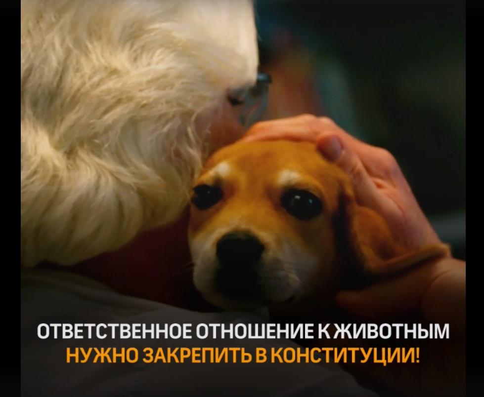 В Твери обсуждают ролик о защите жизни животных