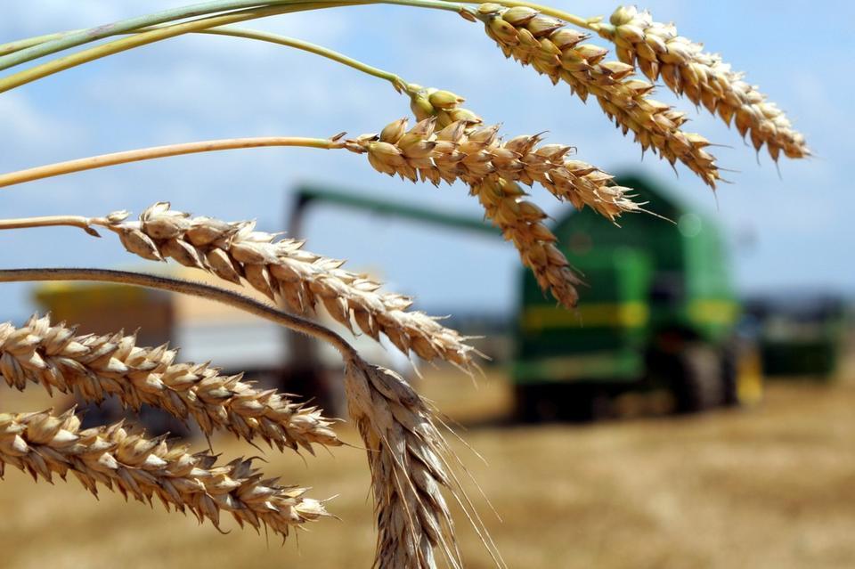 В Тверской области на развитие растениеводства направят 190 млн рублей