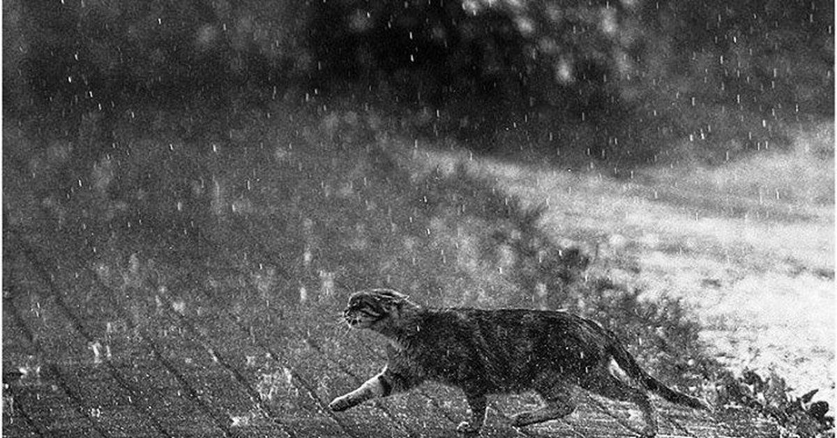 На Тверскую область надвигается непогода