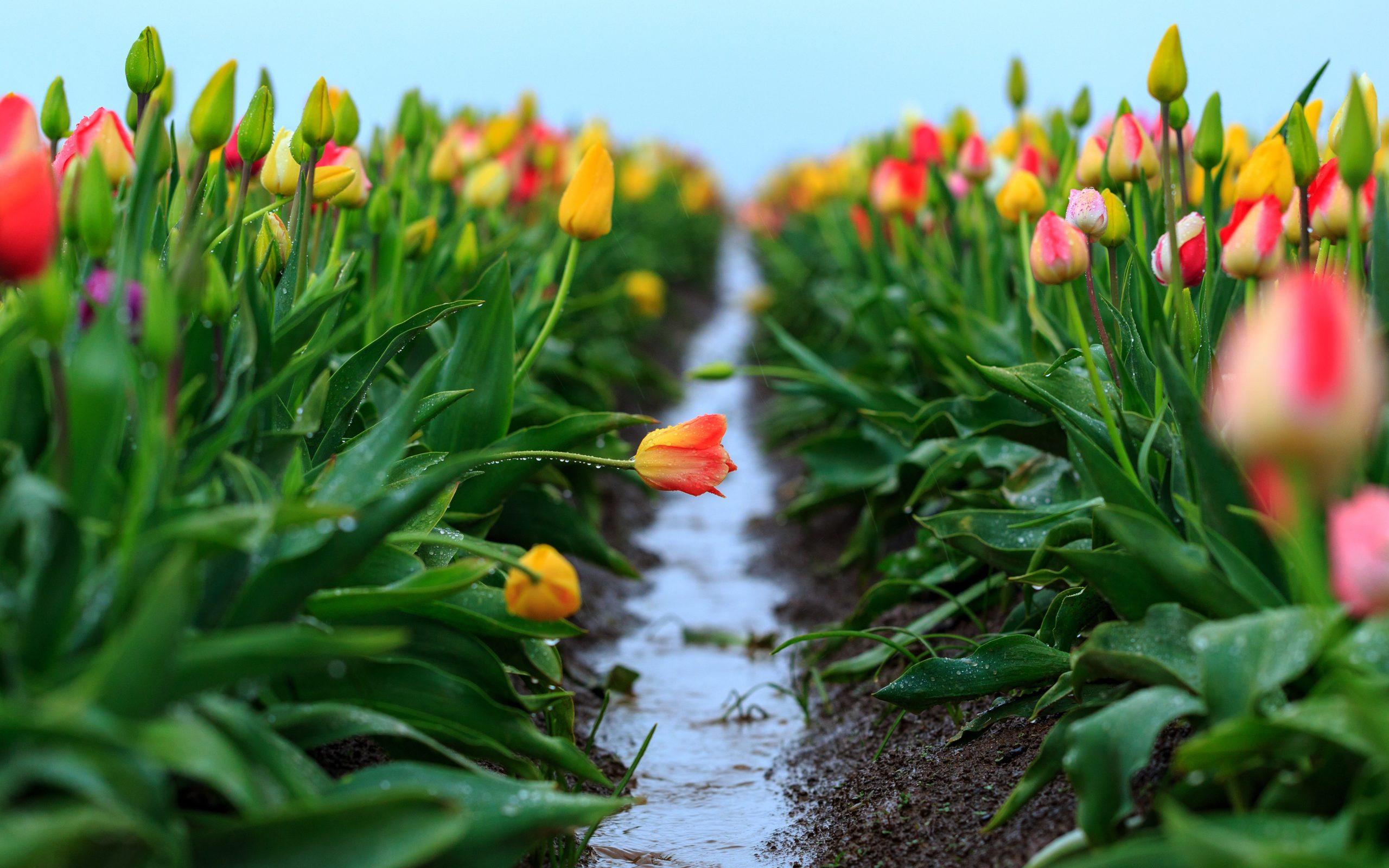 Стала известна погода в Тверской области на 8 марта