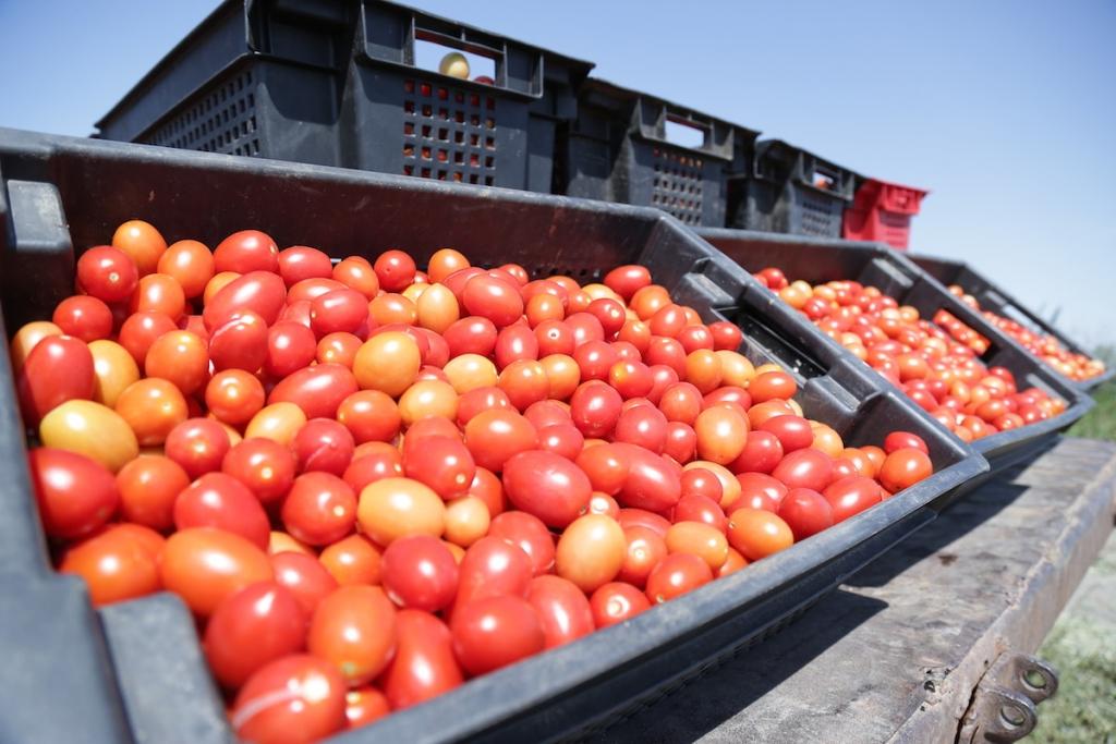В Твери уничтожили 64 кг томатов и 117 кг винограда
