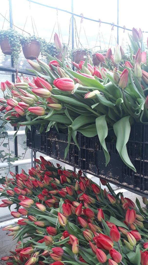 В Твери начали продавать цветы на улице