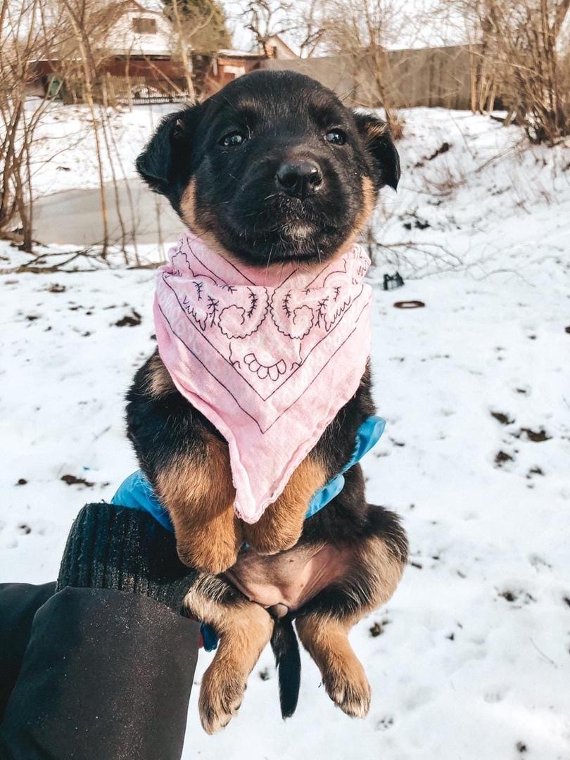 Неизвестный доброжелатель пожертвовал 20 000 рублей щенкам в Твери