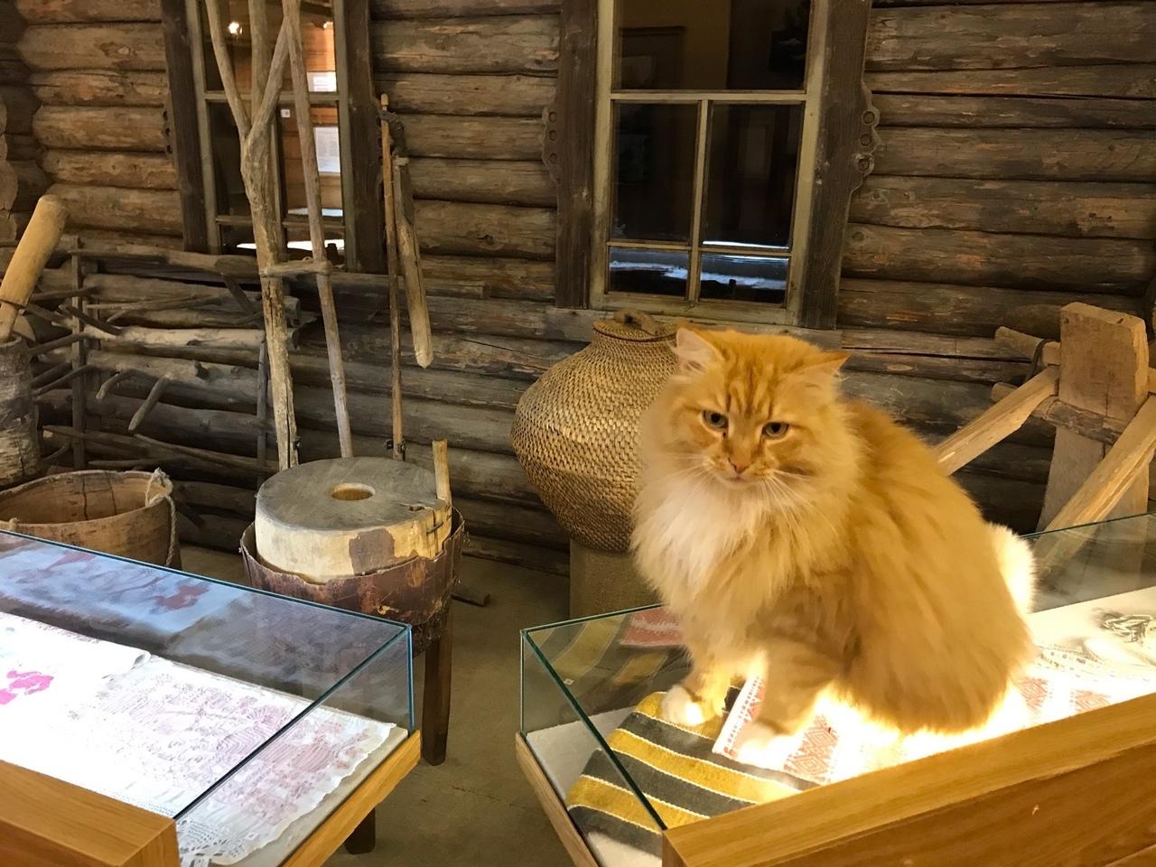 Кот-экскурсовод встречает гостей в Тверской области