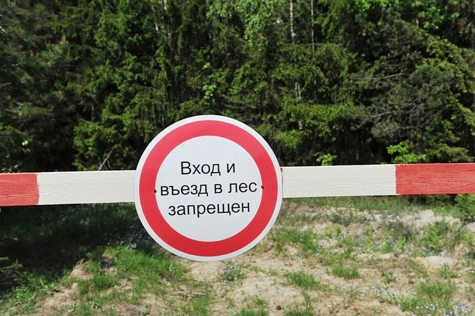 Жителям Тверской области все еще нельзя ходить в лес