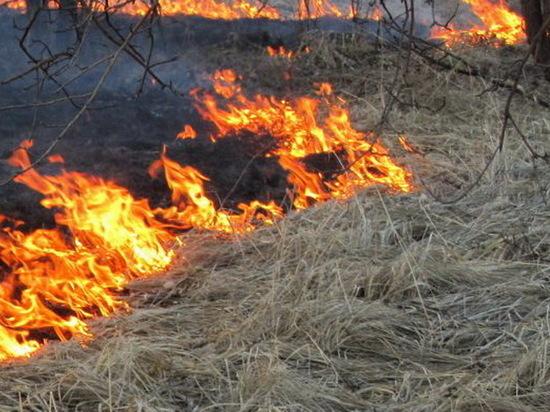 В Твери пожарные 100 раз тушили горевшую траву