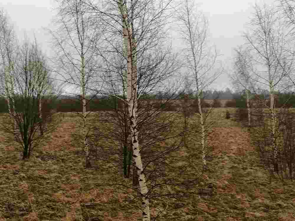 В Тверской области зарастают сорняками земли сельскохозяйственного назначения