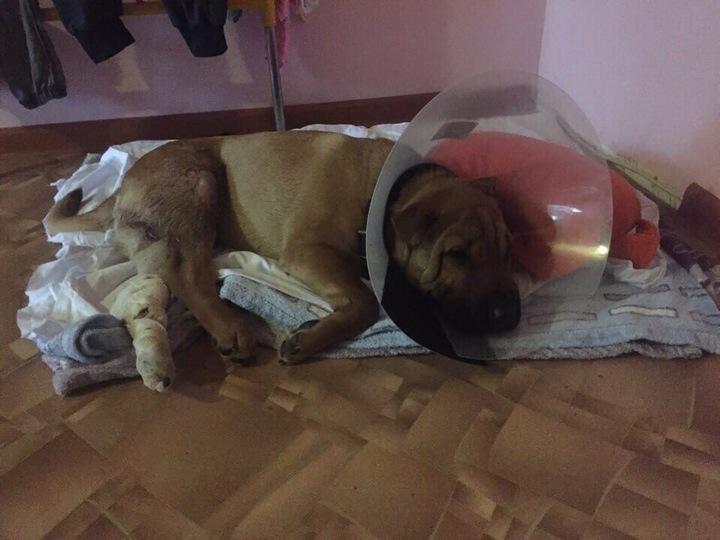 В Твери брошенного пса устроили на работу полицию