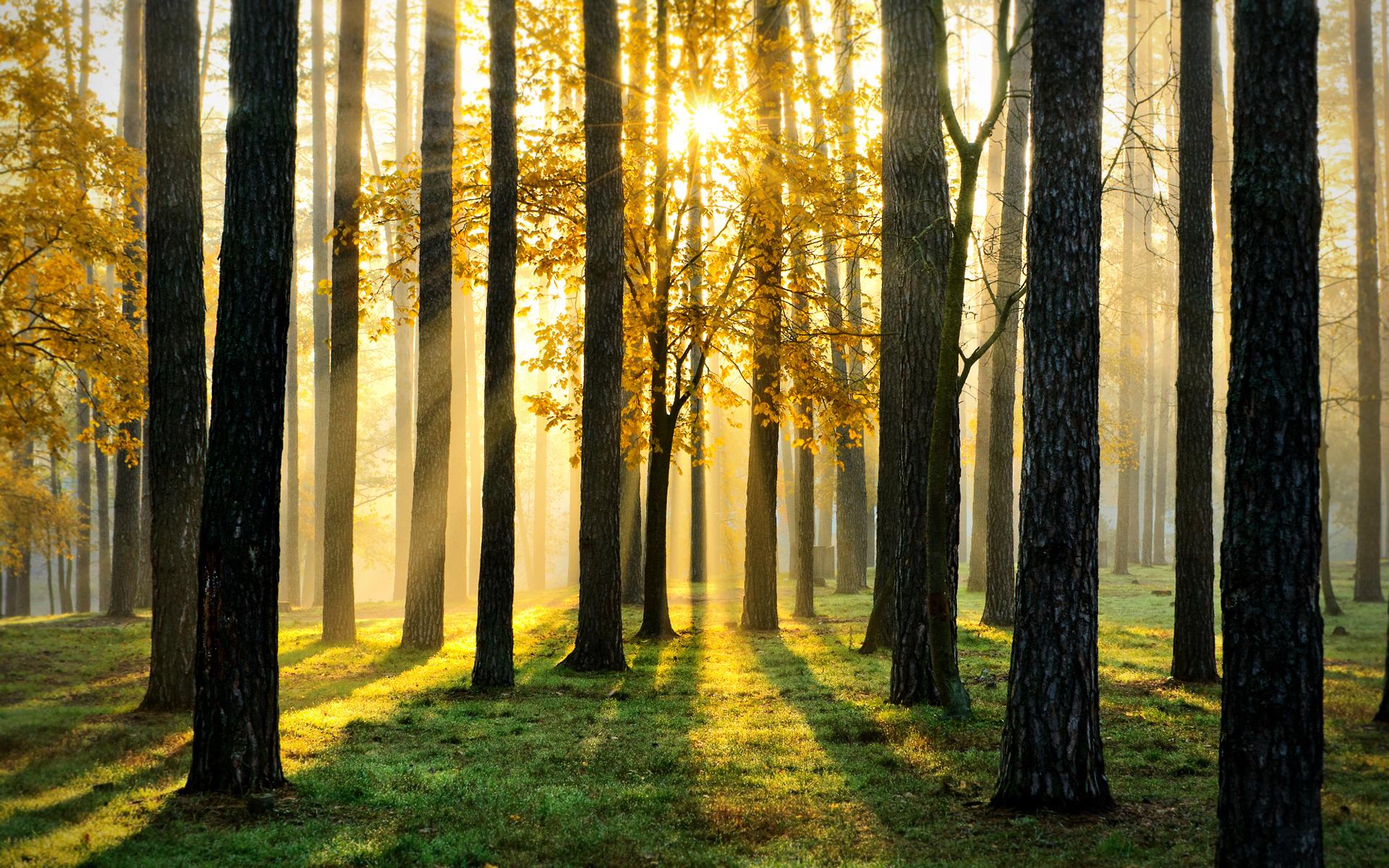 В Тверской области лесной фонд увеличится более чем на 366 га