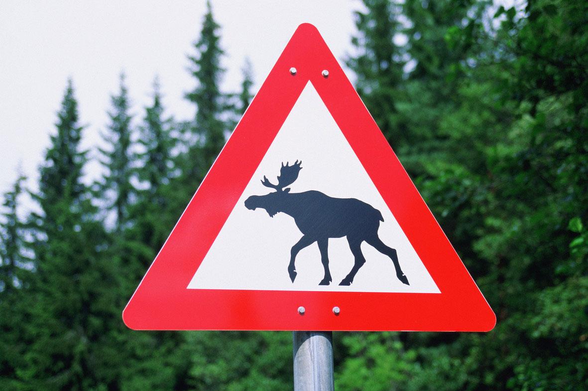 В Тверской области началась миграции диких животных