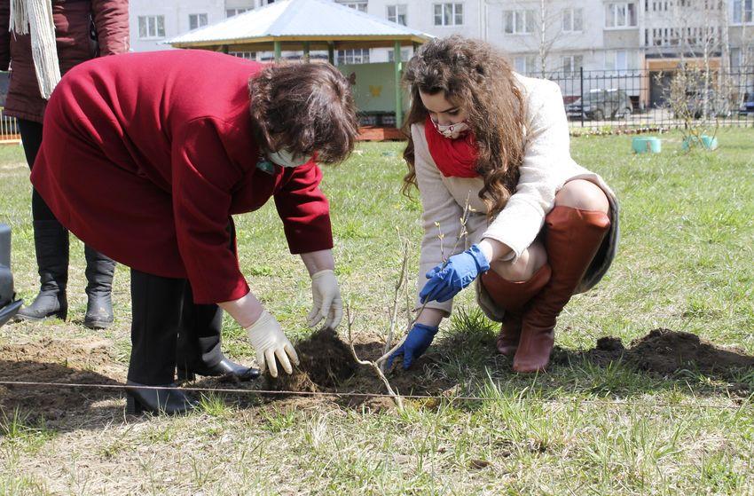 В детском саду Твери появилась аллея сирени