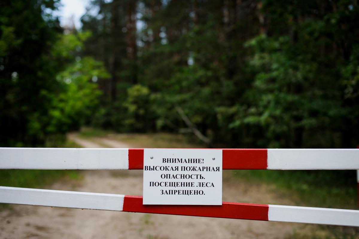 В Тверской области ввели временный запрет на посещение лесов
