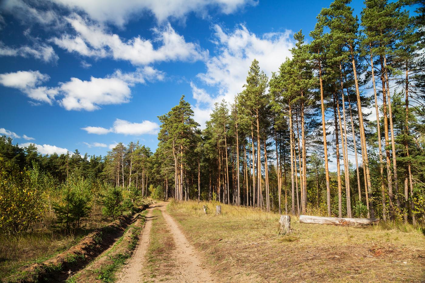 Тверские леса будут усиленно патрулировать спецгруппы