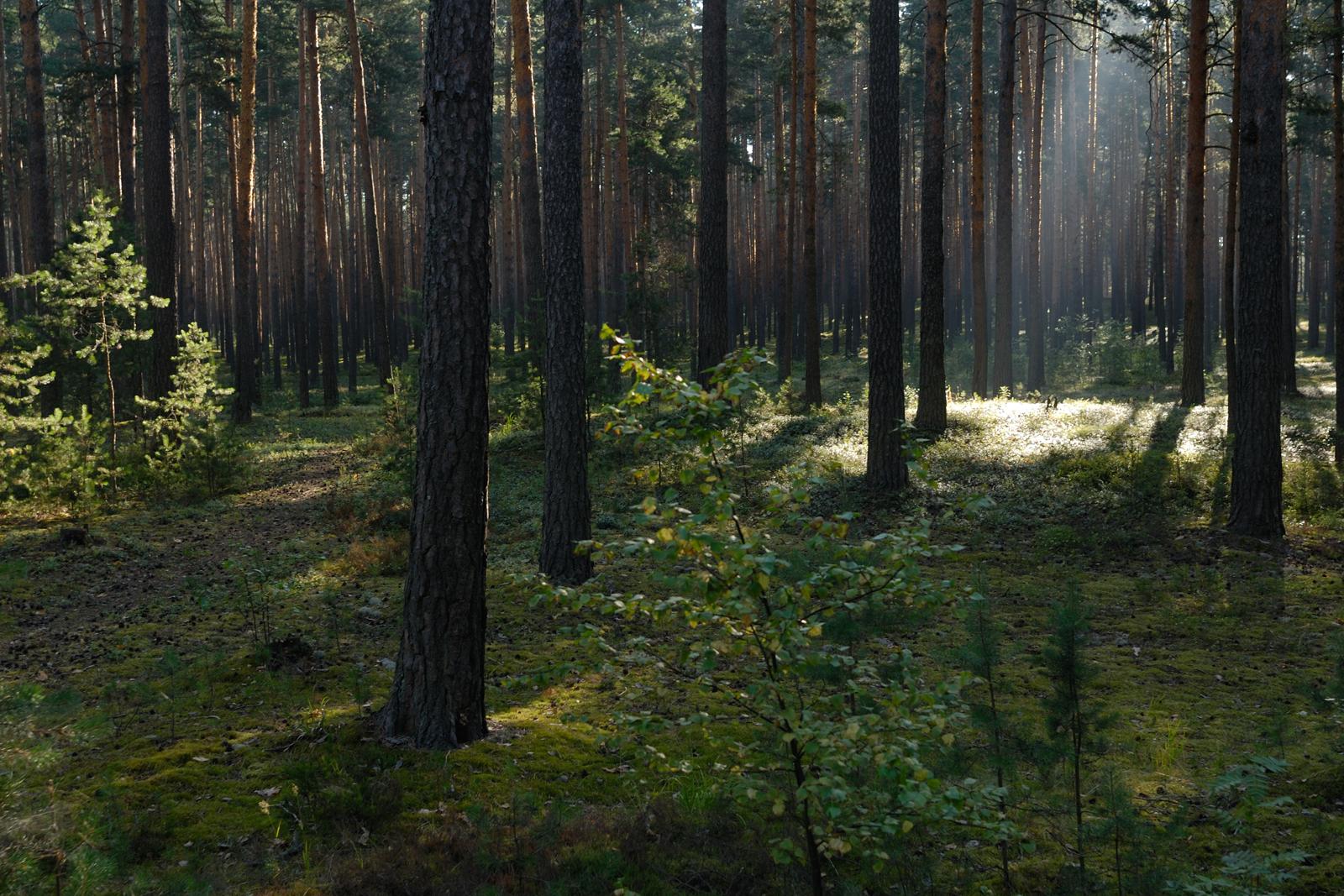 В Тверской области в лесу прятали кокаин